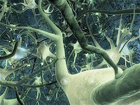 http://www.atoute.org/n/IMG/jpg/neurone.jpg